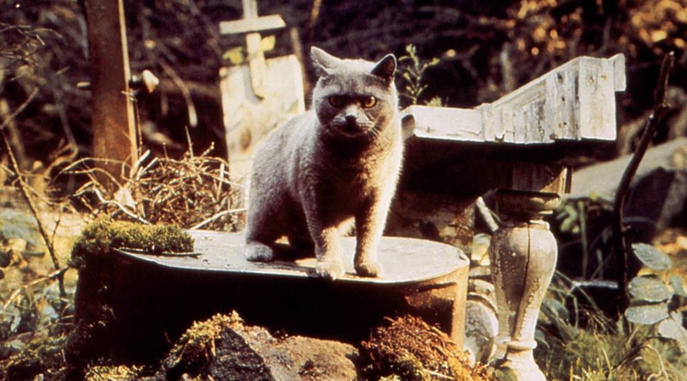 Кадр из фильма «Кладбище домашних животных» (1989)