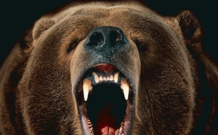 постер земля медведей поражать плоды любой
