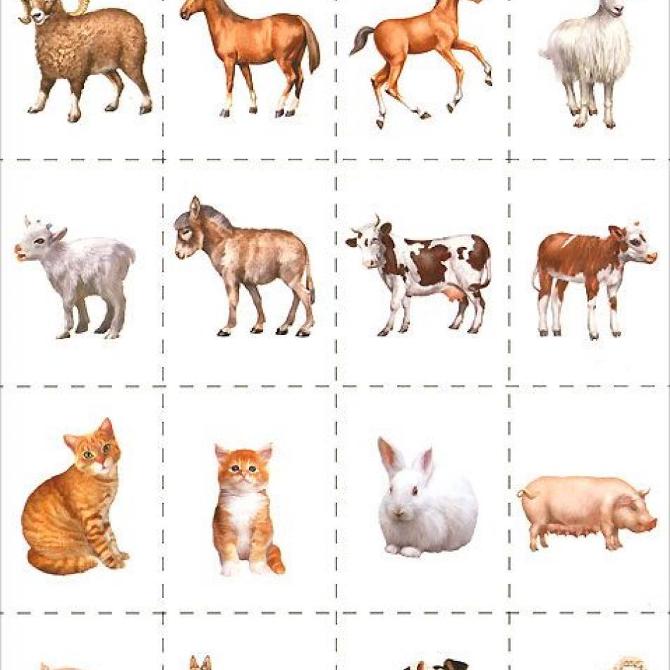 принципе, развивающие картинки с дикими животными поводу принятия присяги