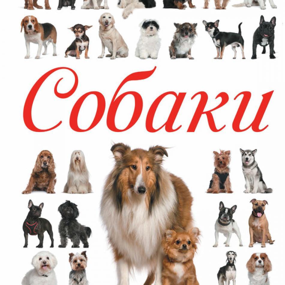 Энциклопедия пород собак с картинками