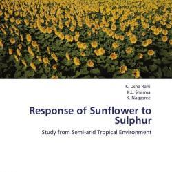 phosphorous nutrient deficiency of sunflowers